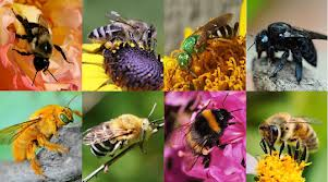 Bee Super Foods